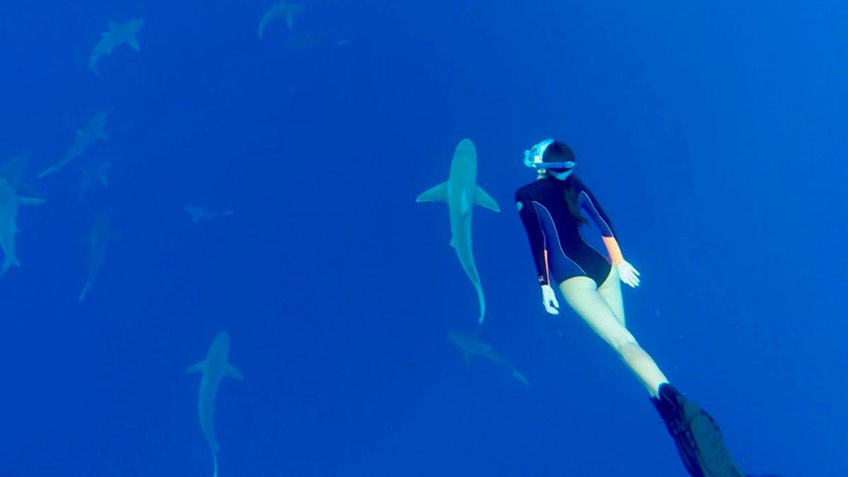 Swim with sharks on Oahu