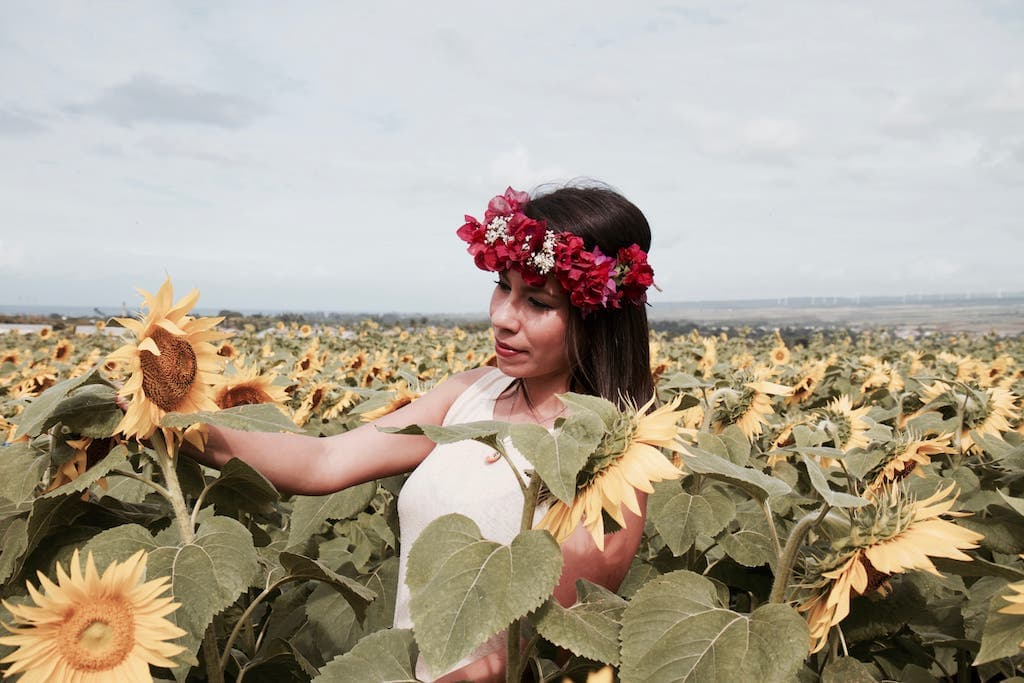 sunflower fields oahu